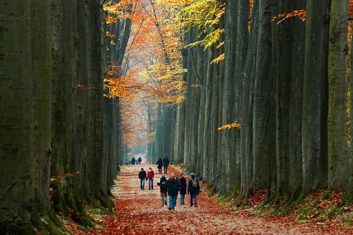 Суаньский лес, Брюссель