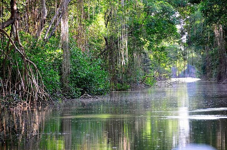Карони-Суомп (Caroni Swamp)