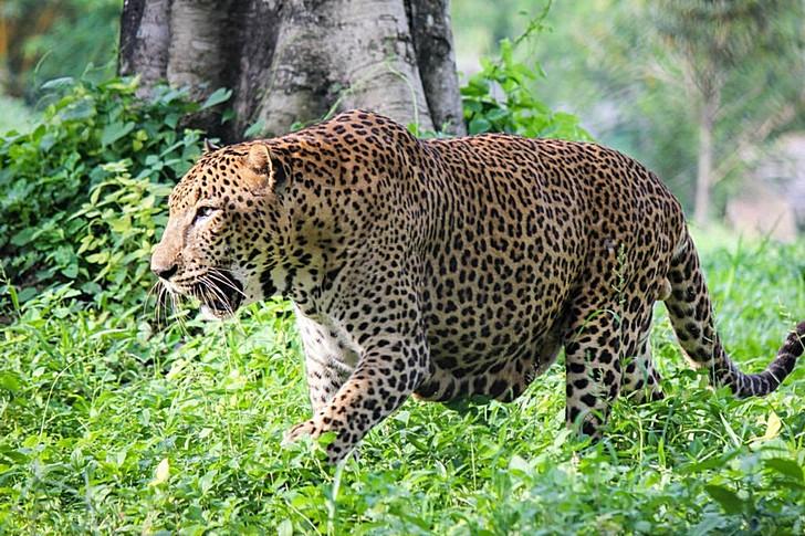 pinnawala-zoo