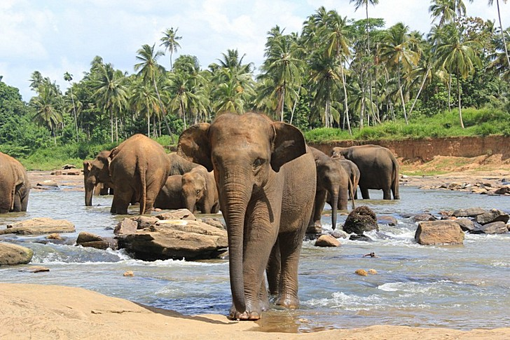 priyut-slonov-pinnavela