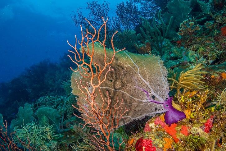 mesoamerican-reef