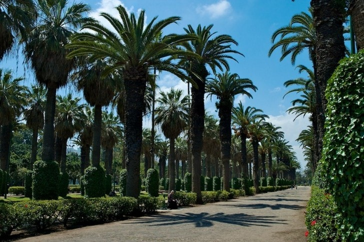 park-ligi-arabskih-gosudarstv