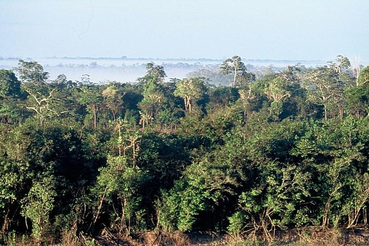 tropicheskie-lesa-amazonki