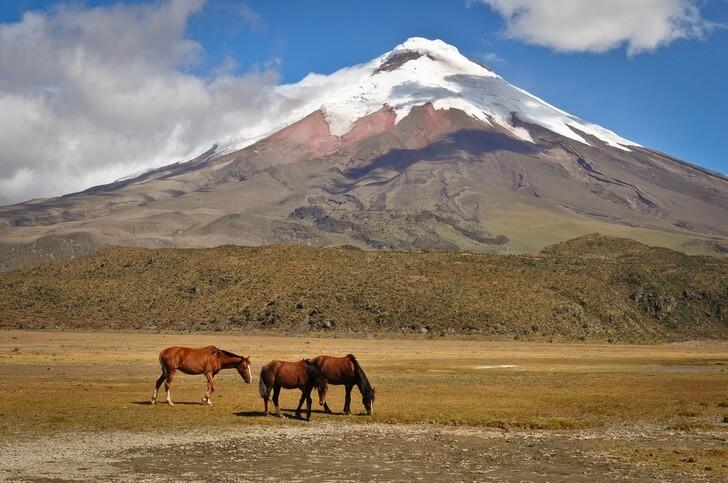 vulkan-kotopakhi
