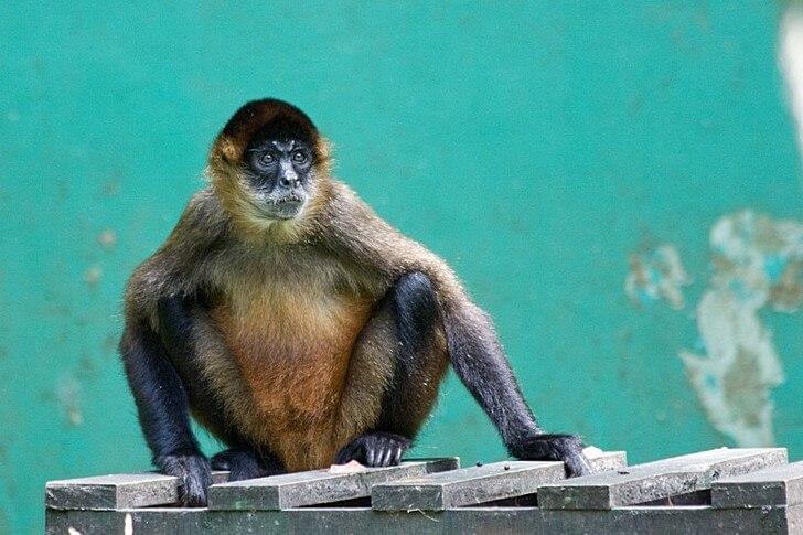 zoopark-imeni-simona-bolivara