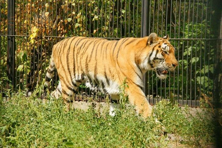 almatinskij-zoopark