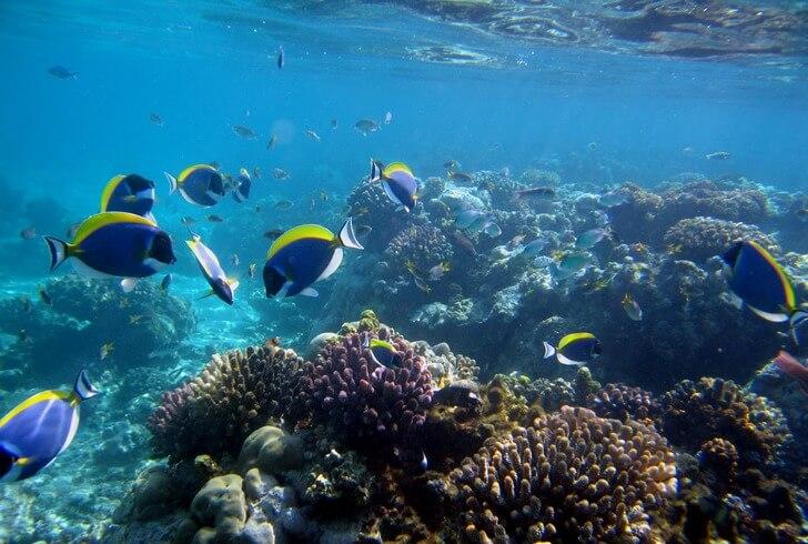 nacionalnyj-morskoj-park-vatamu