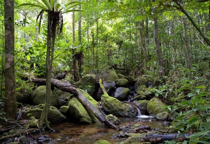 tropicheskie-lesa-acinanany