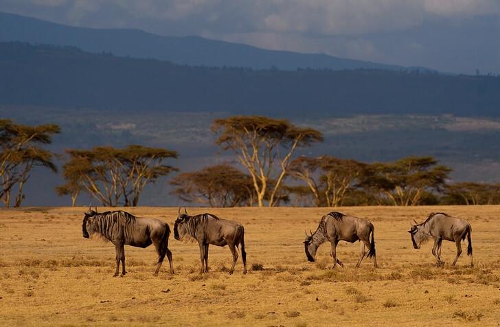 zapovednik-masai-mara