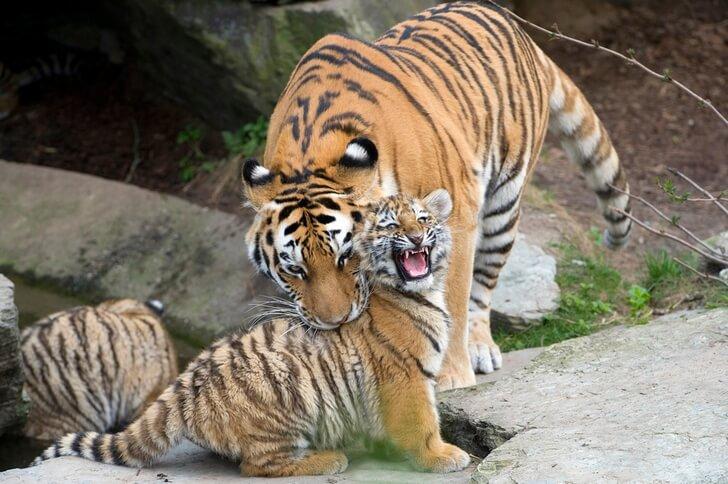 kelnskiy-zoopark