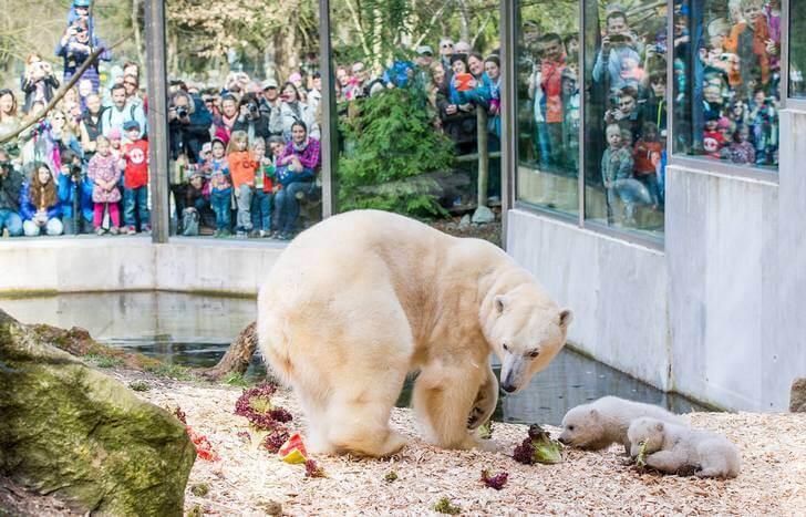 zoopark-hellabrunn