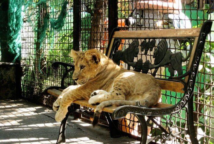 zoopark-skazka