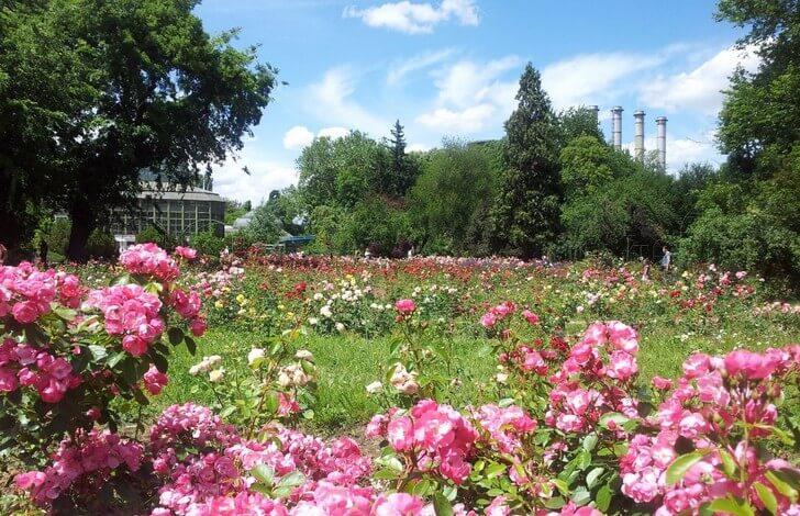 bukharestskii-botanicheskii-sad