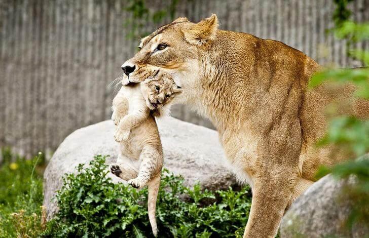 kopengagenskij-zoopark