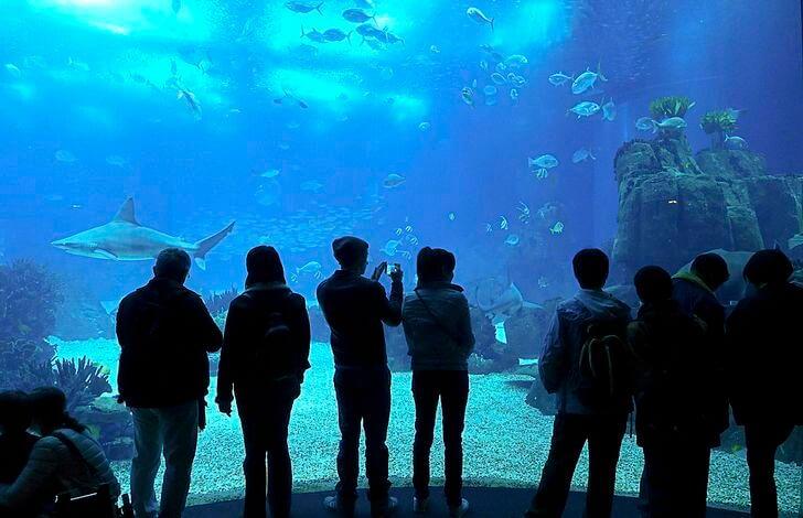 lissabonskiy-okeanarium