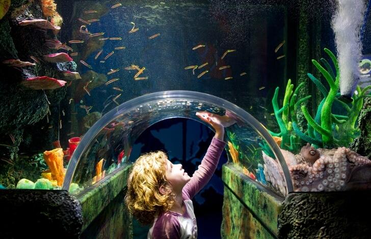 melburnskiy-akwarium