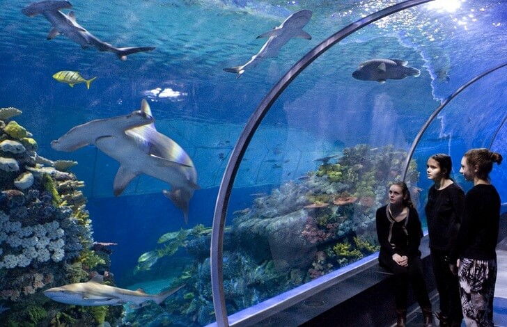 national-aquarium-denmark